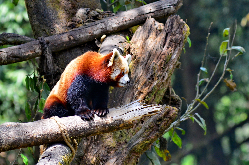 Image result for HD PICTURES OF The Padmaja Naidu Zoological Park